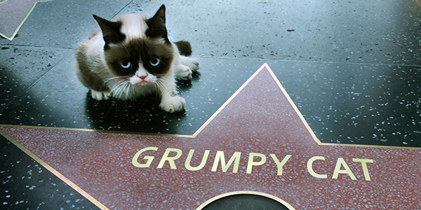 Watch the Trailer For the Grumpy Cat Christmas Movie